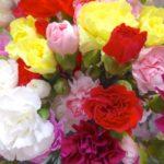 母の日のカーネーションの花言葉は?色での違いは?本数に決まりや意味は?